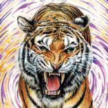 tigerswag