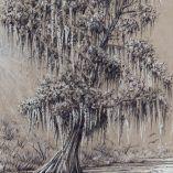 southerncypress